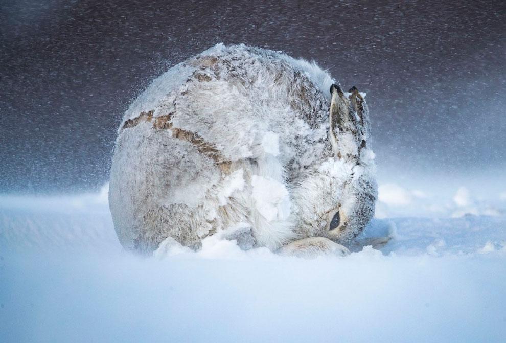 luchshie-snimki-s-konkursa-bigpicture-natural-world-photography-2020