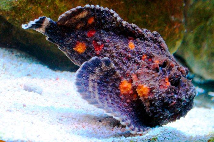 7-opasnyh-ryb-kotorye-sposobny-ubit-cheloveka