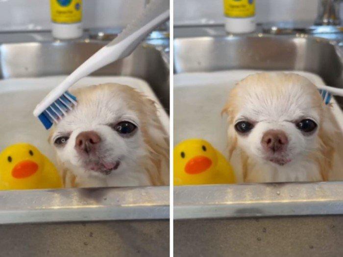 kupanie-vyzyvaet-u-zhivotnyh-samye-raznye-emotsii